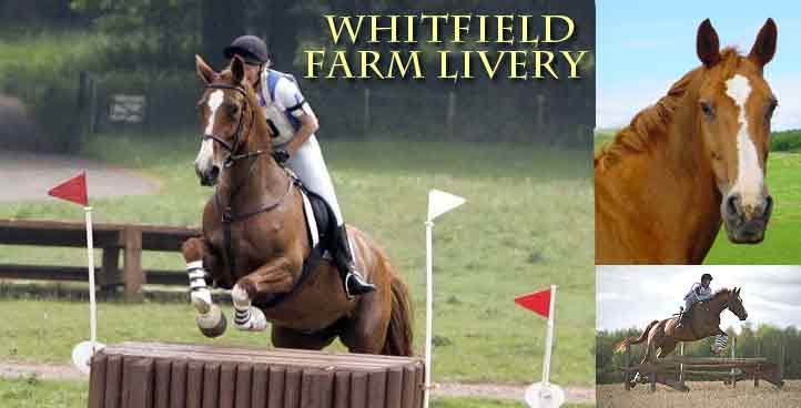 Whitfield Farm Horse Livery
